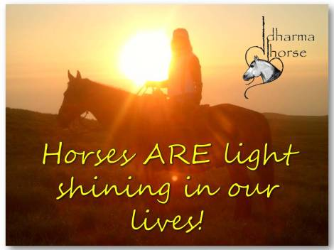 Horses ARE light shining in our lives!